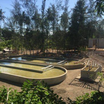 Notre nouvelle ferme au Kenya quasi prête !