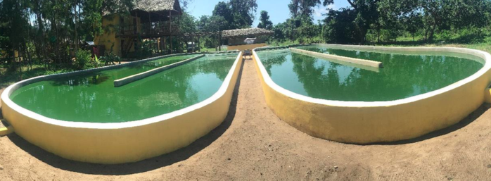 ferme de spiruline au Kenya Secteur10